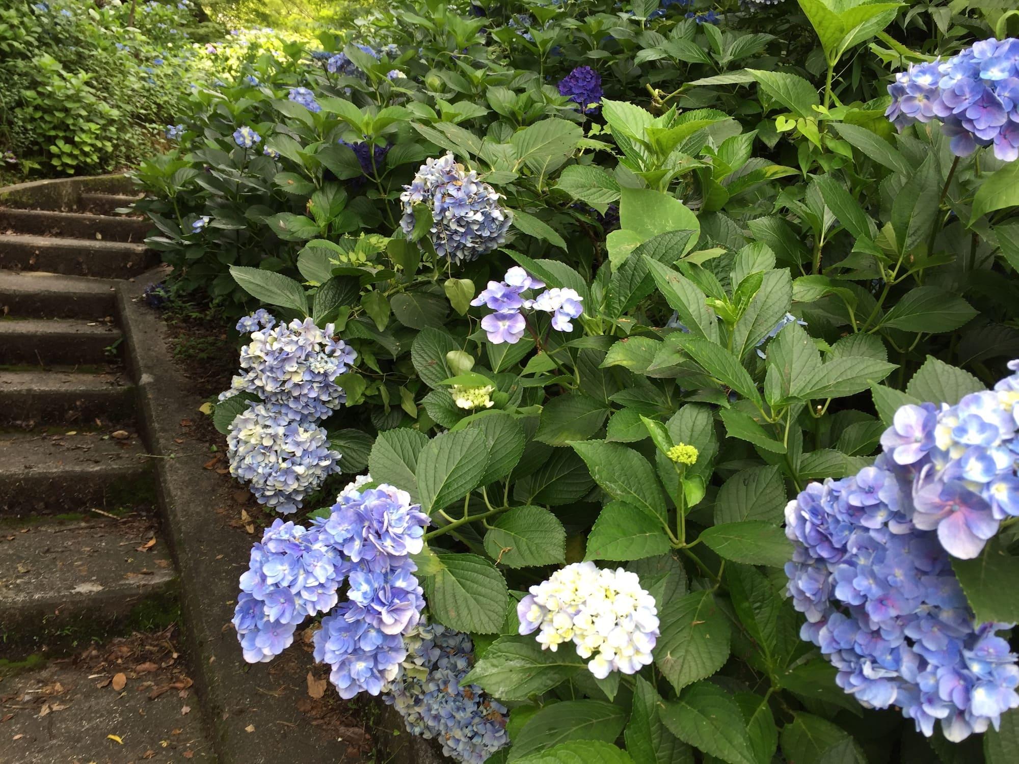 Flores Japonesas Las 10 Mas Bonitas Y Su Significado En Espanol