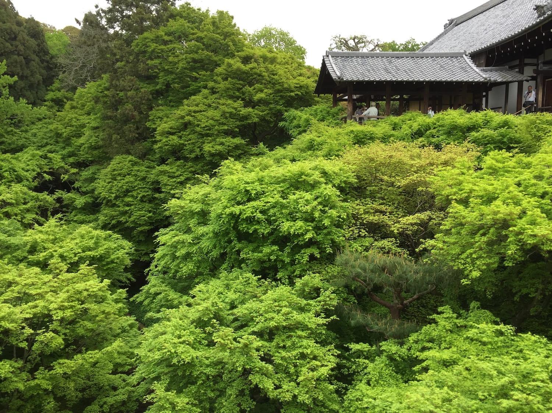 Golden Week: Midori no Hi en el Templo Tofukuji de Kyoto