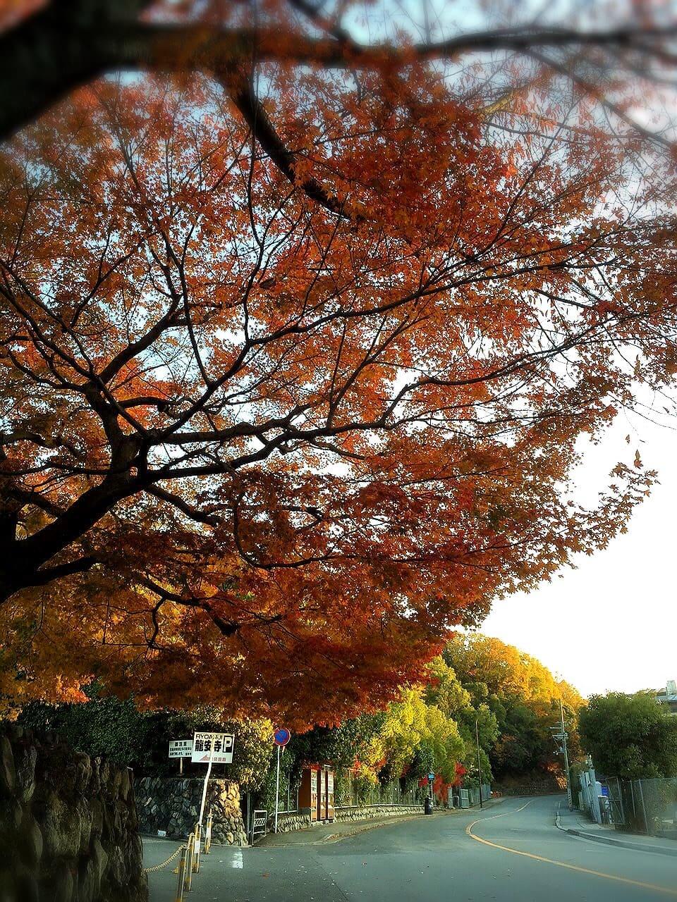 Templo Ryoanji de Kyoto