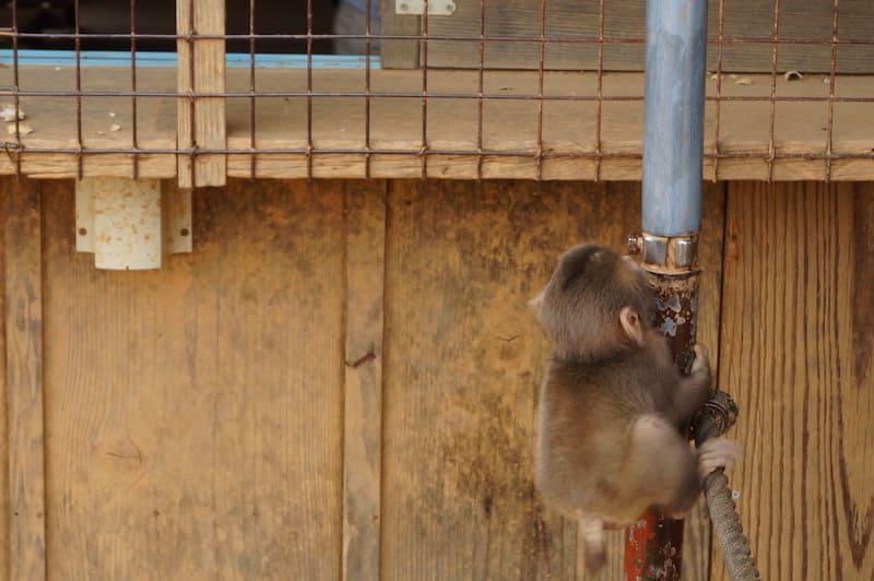 Parque de monos Iwatayama 8