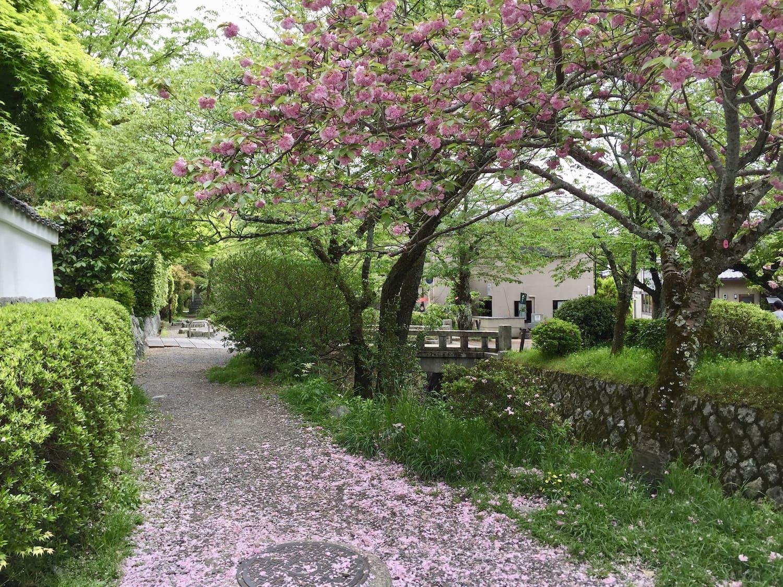 Camino del Filósofo de Kyoto